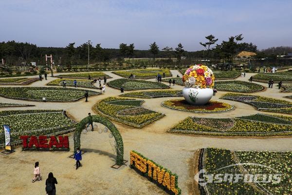 수선화 꽃 축제장 전경.  사진/강종민 기자